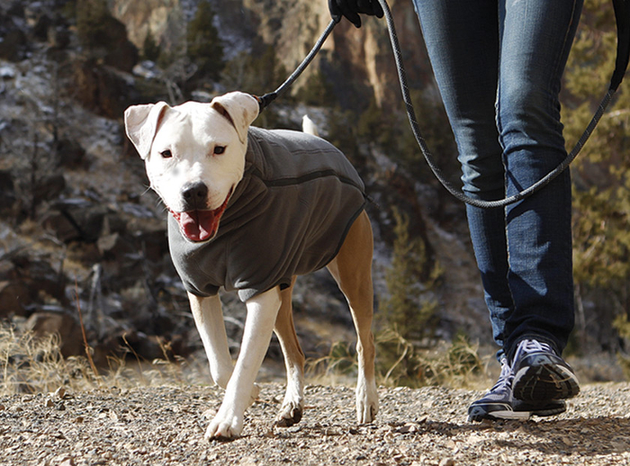 What Your Dog Really Wants For Christmas Gearjunkie