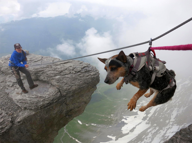 Meet The World S First Wingsuit Base Jumping Dog