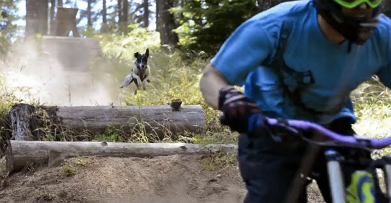 the adventures of little red mountain biker Bike park more stats for little red riding hood mountain bike trail altitude change  no videos have been added for little red riding hood yet, .
