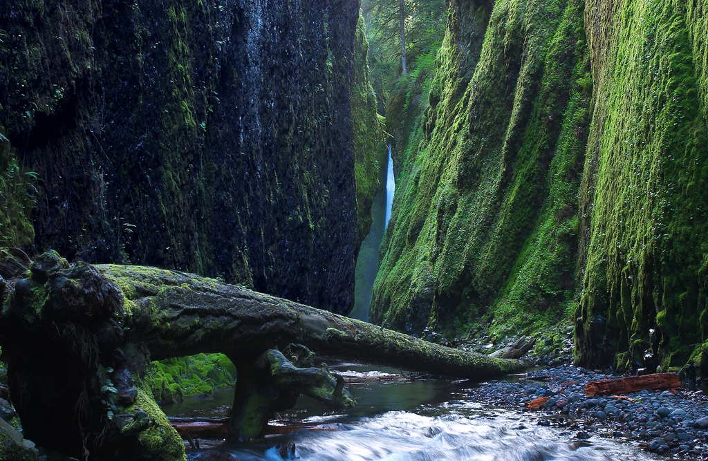 Oneonta Gorge 11 Great North American Hikes